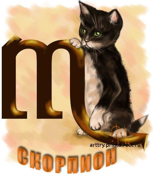 Кто подходит скорпиону коту