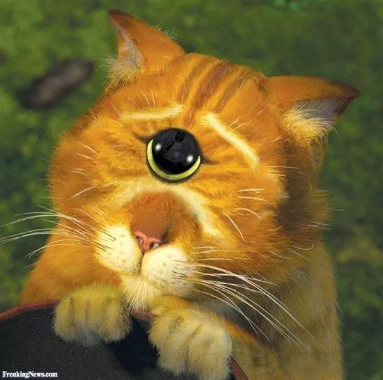 Для приколы, прикольные картинки кота из шрека