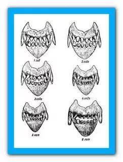 как определить возраст котенка по зубам фото галерее телефона