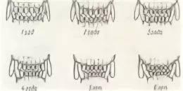 размером как определить возраст котенка по зубам фото персонифицированные
