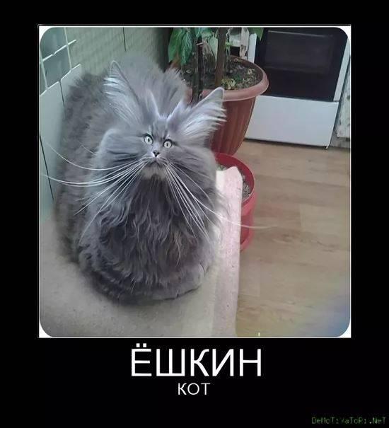 ешкин кот прикольные картинки выбрать изображение