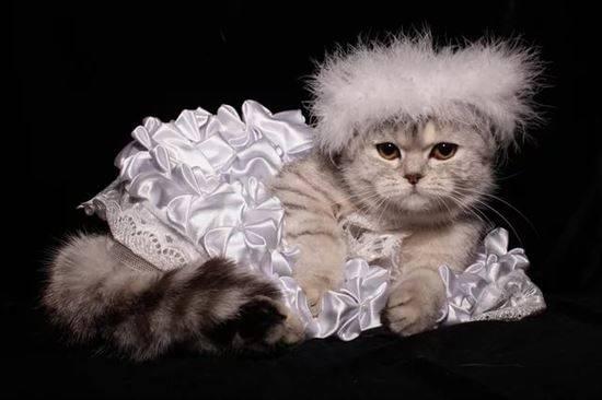 Открытки коты с надписями