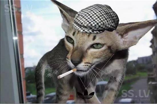 Картинка кота гопника