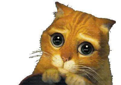 Гифка котики из шрека глаза стал