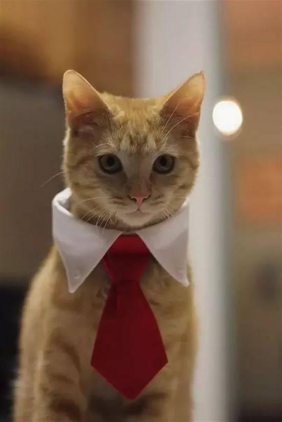 ставит раком кот в галстуке картинки прикольные ключевые