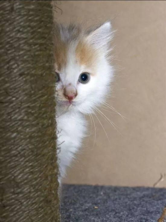 Картинки котята приколы с надписями