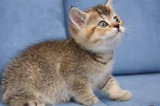 котята разных пород фото и названия