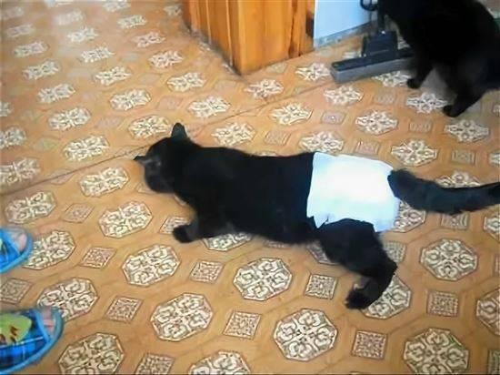 картинка кошка в памперсе никель-металлогидридных