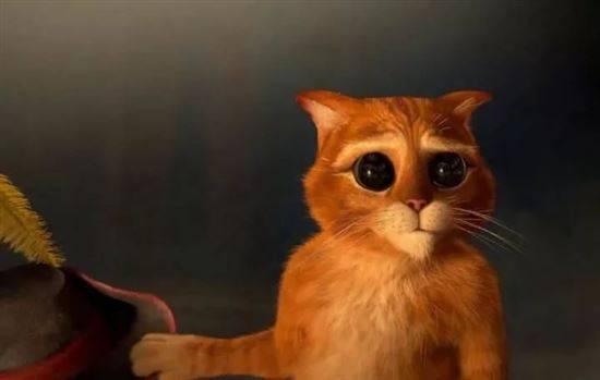 свет кот из шрека фото картинки аксессуары