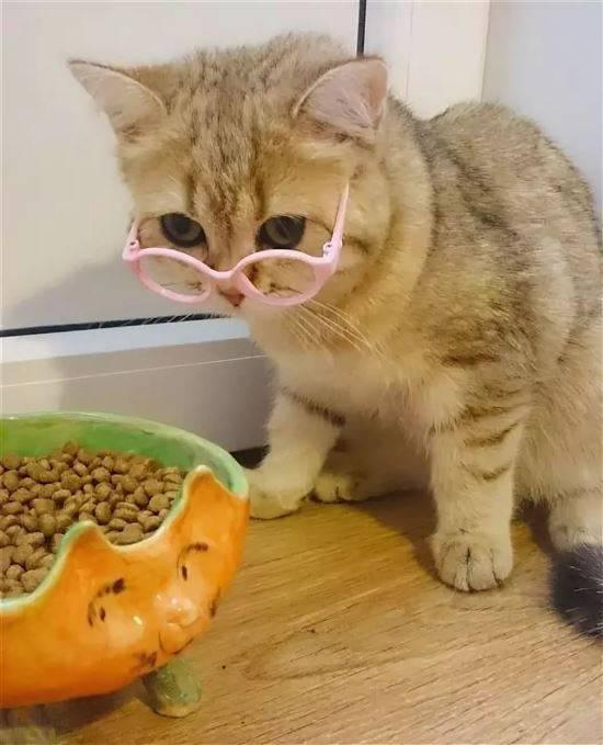 обычно смешные фото кошек до слез правительство